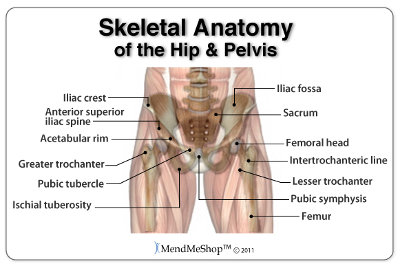 Hip Injury Information And Treatments